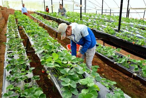 Đài Loan tiếp nhận lao động nước ngoài vào làm việc trong lĩnh vực nông nghiệp